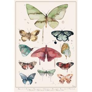 Lepidópteros - Lámina A3 Marialu