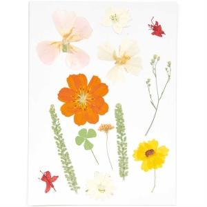 mix set natural orange (13pcs) - (flores prensadas)