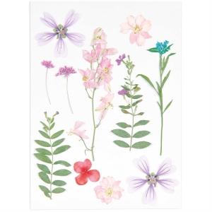 Mix set pink violet (11pcs) - (flores prensadas)
