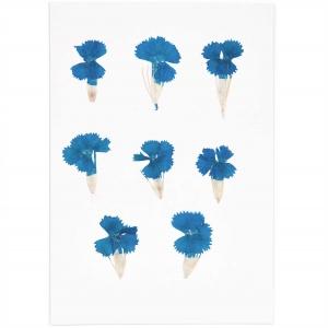 Chinese dianthus blue (6pcs) - (flores prensadas)