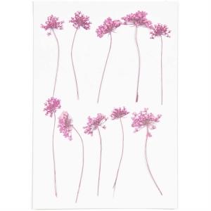 ammi pink (8pcs) - (flores prensadas)