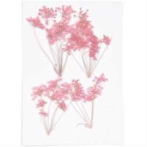 ammi branch pink (4pcs) - (flores prensadas)