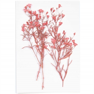 gypsophila red (4pcs) - (flores prensadas)