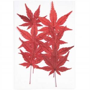 Maple leaf (8pcs) - (flores prensadas)