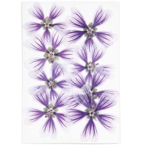 Hollyhock violet (8pcs) - (flores prensadas)
