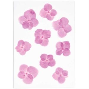 Hydrangea pink (9pcs) - (flores prensadas)