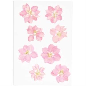 Delphinium pink (8pcs) - (flores prensadas)