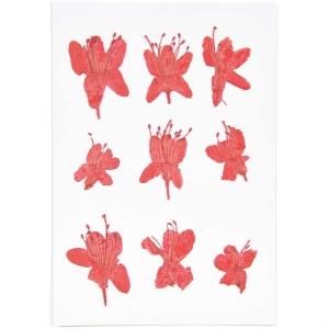 azalea (8pcs) - (flores prensadas)