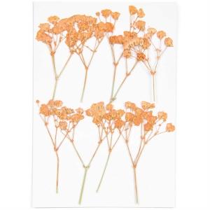 Gypsophila orange (8pcs) - (flores prensadas)