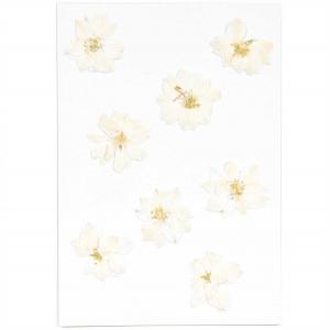 Delphinium white (8pcs) - (flores prensadas)